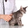 Ветеринарные клиники в Лодейном Поле